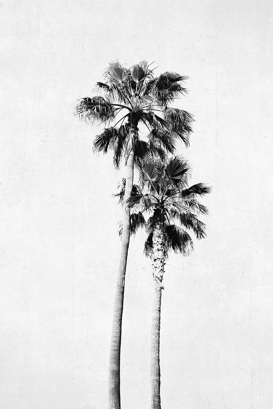 Cool Tree Black And White: Palm Tree Photograph Vertical Print Black And White Art