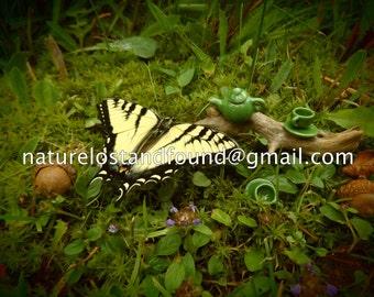 Butterfly Tea.