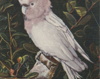 Topsy the Leadbeater Cockatoo- 1940s Vintage Postcard- Parrot Jungle- Miami, Florida- Souvenir Card- 40s Decor- Paper Ephemera