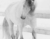 Snowy Mare Tosses Her Head - Fine Art Horse Photograph - Horse - Snow