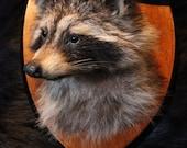 Raccoon Shoulder Mount Taxidermy Oddities Curio Weird