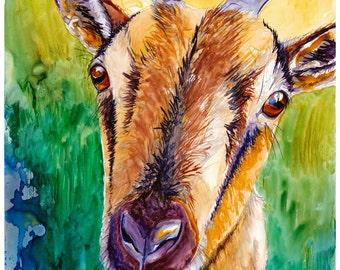 Goat Watercolor Painting Fine Art Print 8x10 Watercolor Goat Print Goat Painting Goat Art Colorful Goat Art Print Colorful Watercolor Goat