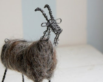 Wired goat with dark wool