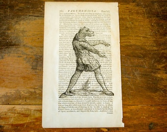 "Authentic 1676 Book Page with Mythical Creature Print Vintage Halloween Decoration Odd, Strange, Bizarre Image 12-1/2"" by 7-1/2"""