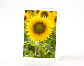 Sunny Yellow Sunflowers Card, Blank Photo Greeting Cards, Photo Note Cards, Card Sets, Flower Photography, Nature Photography Cards