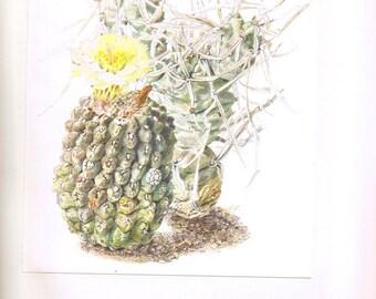 1954 Vintage cactus poster Neoporteria Opuntia art Botanical art Cactus print Plant poster Cactus art Plant art Cactuses  Botanical poster