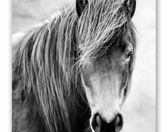 Black and White Horse Photography, Horse Photo, Wild Horse Print, Black Horse, Horse Lover Gift, Icelandic Horse, Iceland Photography Print