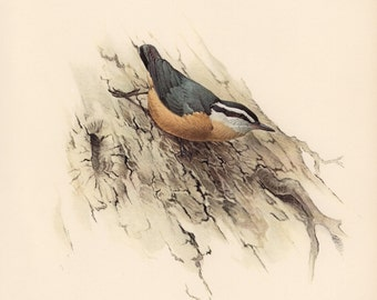 JF Lansdowne Print Book Plate Art, Red-breasted Nuthatch