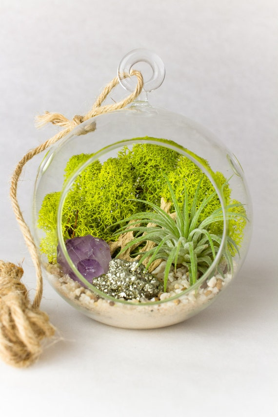 Hanging Terrarium Air Plant with Amethyst Crystal Point and Pyrite || Small Round
