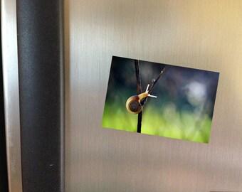 Garden Snail Refrigerator Magnet, Fridge Magnet, Photo Magnet, Nature Photo Magnet, Kitchen Decor, Ice Box Magnet, Fine Art Magnet