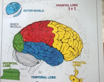 human brain coloring book new unused softcover book 300 pages of frontal media lobes with - The Human Brain Coloring Book