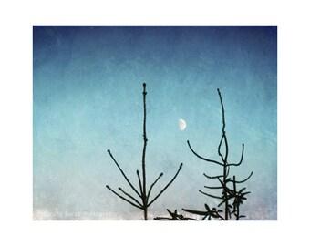 Moon Art, Moon Photography, Fine Art Print, Astronomy Art, Peaceful Art, Blue Art Print, Nature Wall Art, Dusk, Evergreen Trees, Wall Art