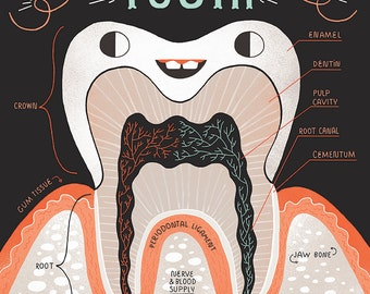 Anatomy of a Tooth:  Art print and poster