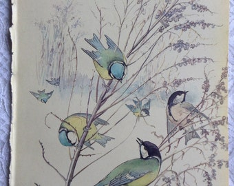 Vintage Botanical Book Page - January - Blue Tits - Country Diary of an Edwardian Lady - Edith Holden - Coleridge