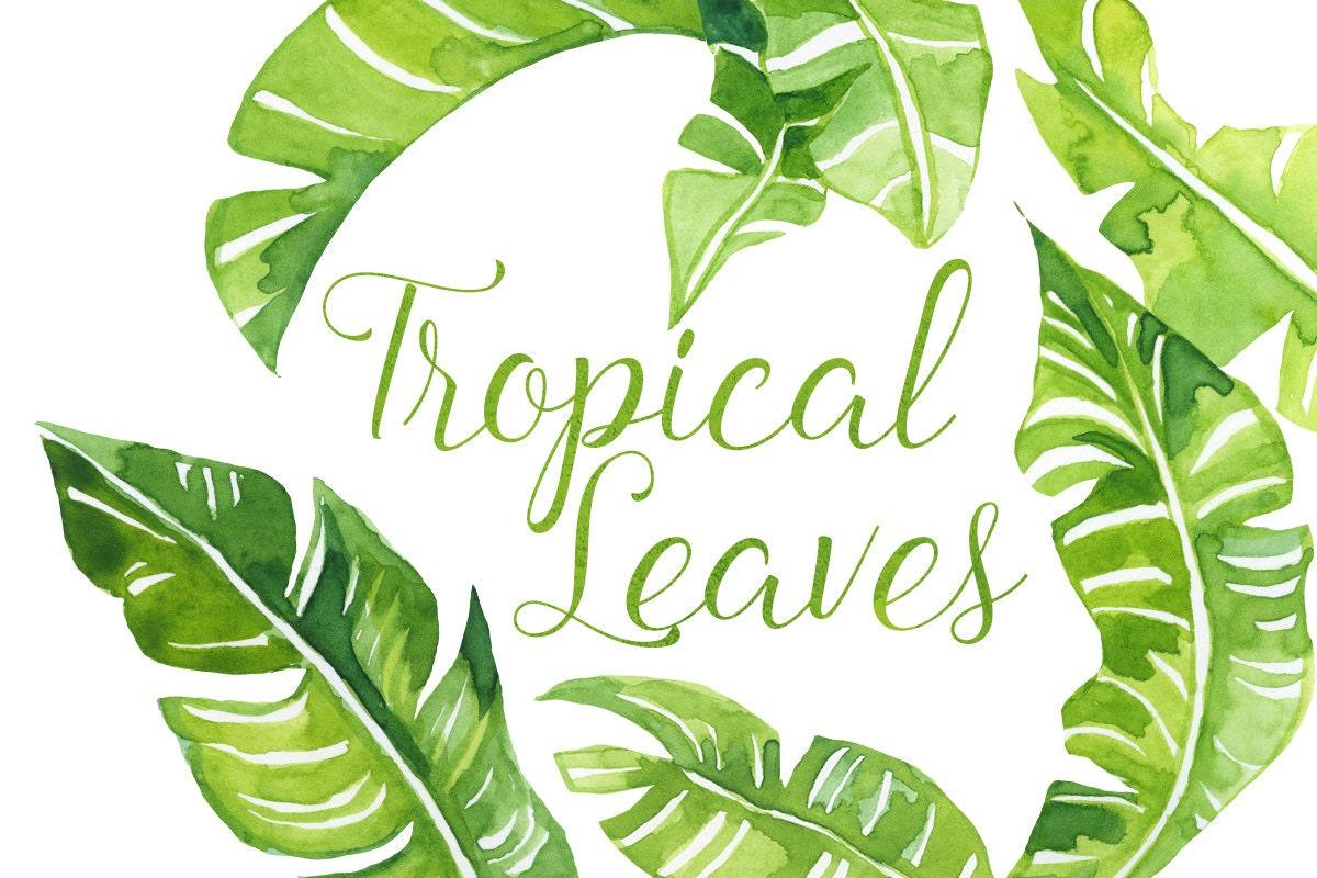 Watercolor Tropical palm Leaves Clip Art Tropics clipart | Etsy
