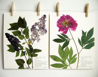 Lilac and Peony Print Set, #191a 198b, botanical print set of pink purple garden flowers pressed flowers prints dried flower art