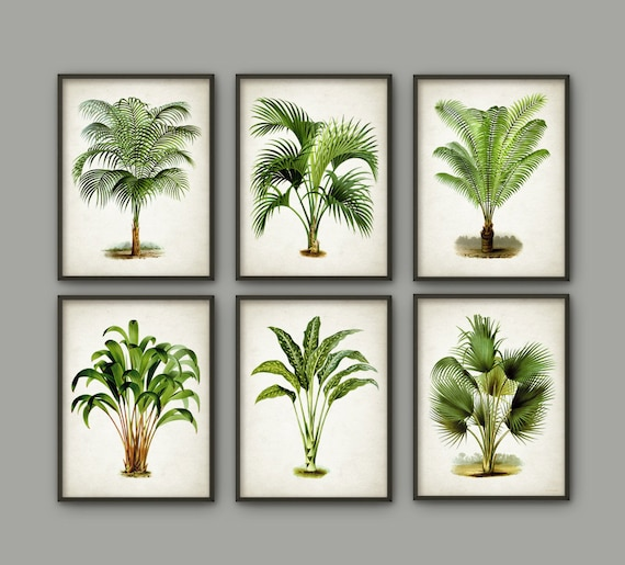 palm tree botanical wall art print set of 6 modern home decor palm