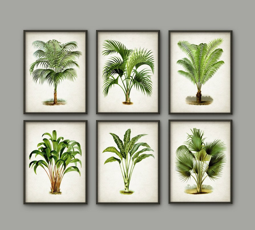 Palm tree botanical wall art print set of 6 modern home for Modern wall art prints