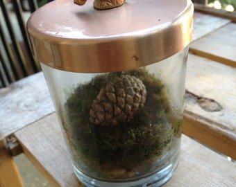 Squirrel's Secret Stash Terrarium