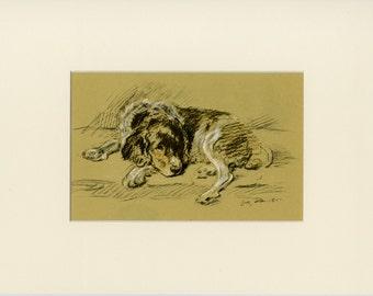 """Spaniel Dog Print - Spaniel Wall Art - Dog Decor - Vintage Dog Print by Lucy Dawson C.1937 - Matted 9x12"""""""