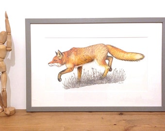 Fox drawing - Original Illustration - fox painting - Nature - fox- Wildlife - Original - fox illustation - original drawing - original fox
