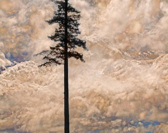 Cloud Print, Landscape Print, Fir Tree, British Columbia, Pacific Northwest, Landscape Photo, Landscape Painting, Evergreens, Lone Tree