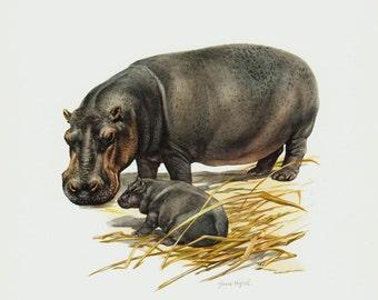 1961 vintage Hippopotamus print, Hippo