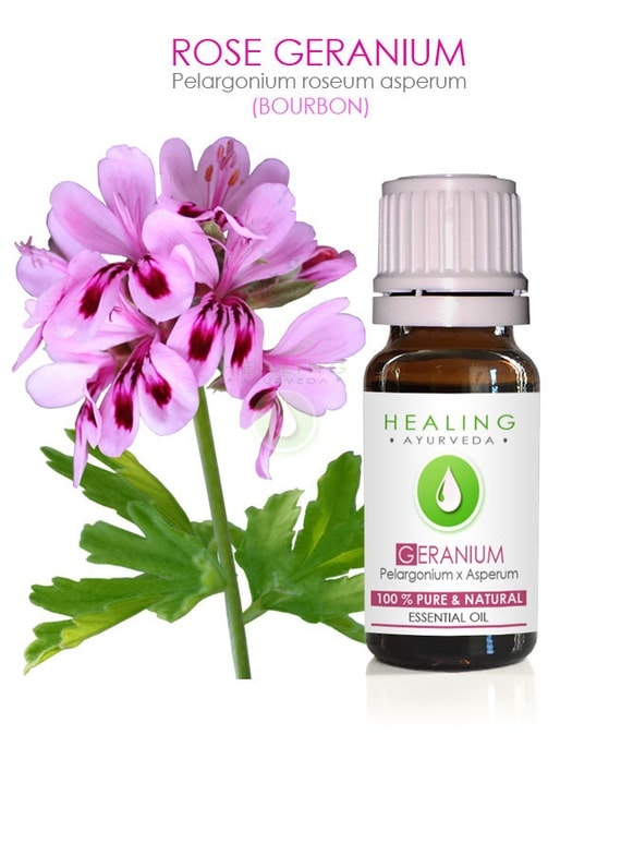 Rose geranium essential oil 100 pure bourbon geranium oil - Rose essential oil business ...