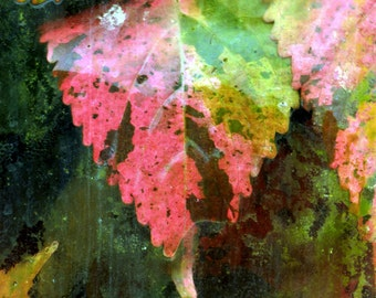 Nature Photography, Autumn colors, Fall leaves, botanical print, Fine Art Print, red, yellow, pink, green, wall art, home decor