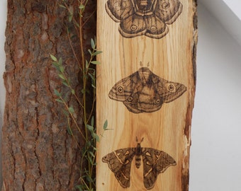 Original dotwork pyrography moth themed hanging wooden wall art.eastern sapphire.