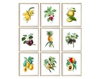 Botanical Kitchen Art Print SET. botanical food art,  colorful kitchen prints, vegan decor, gift for gardener, garden prints, illustration