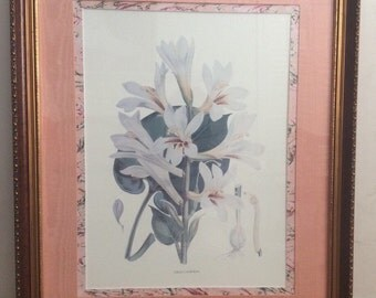 LILIUM CORDIFOLIUM Antique Chromolithographic Plate by WH Fitch 1880 Framed and Matted