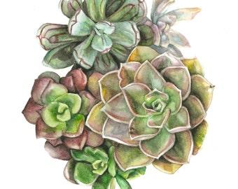Succulent Watercolor Print - Dark Assortment