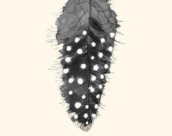 Fjær/Feather