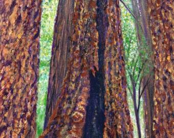 Redwoods in Muir Woods
