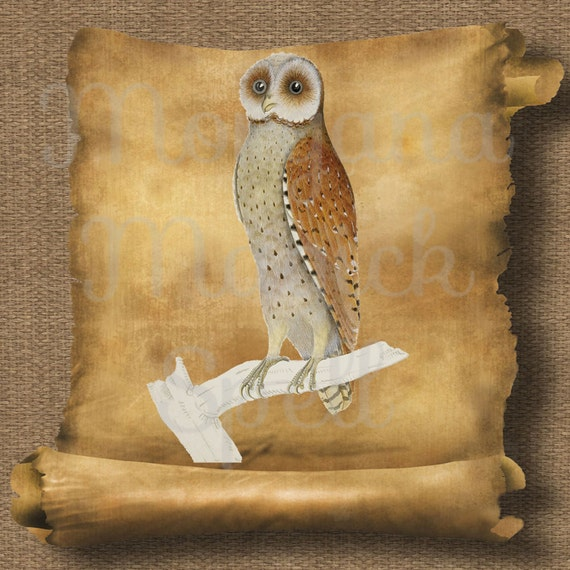 Owl Phodilus Royalty Free Clipart