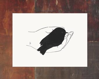 Bird In Hand Print - Black Robin - New Zealand Bird