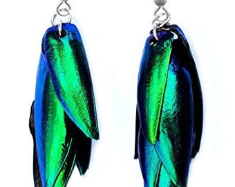Real Blue Green Buprestid Beetle Wing Silver Pair Earrings
