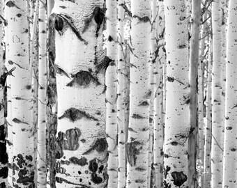 Aspens Trees Colorado Aspen Forest Wall Art Black White Rustic Cabin Lodge Photograph