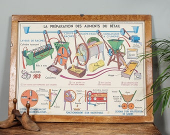 Mid-Century French Vintage Poster - Natural Science Chart
