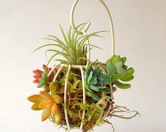 Hanging airplant succulent planter/antique white/Shabby chic floral/succulent planter/airplant display/shabby chic decor/wedding decor