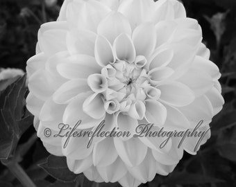 Lovely Dahlia In Black And White