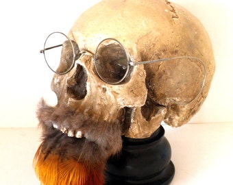 "Skull Cabinet of curiosity, ""Beard Rousse"""