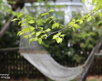 River Birch Tree - Hammock Photo - Leaf Photography - Green Art Prints - Nature Photography - Nature Lover Gift - Fine Art Photography
