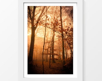"Fairy forest / Trees leaves mist sun autumn printable art home decor downloadable art to print at home or at a print shop / A3 and 11"" x 17"""