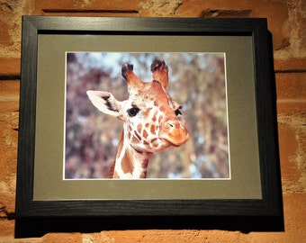 """Framed Photography of a Giraffe, """"Above the Rest"""", matted and framed wall art, wildlife animal photography, animal print"""