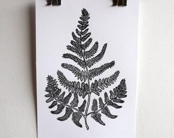 Black and White Fern Illustration