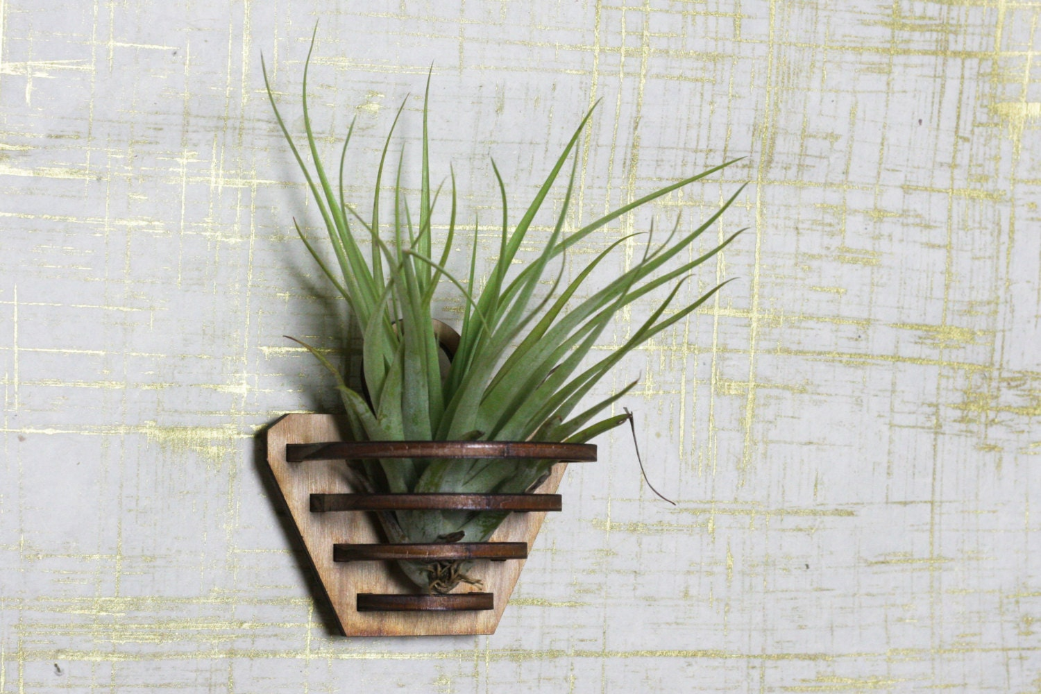 Air plant holder air plant hanger air plant boho decor for Air plant wall hanger
