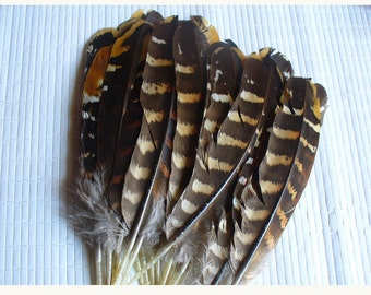 1 feather for various confections * feathers C 101