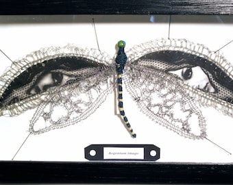 Textile art, faux taxidermy, dragonfly wings bobbin lace